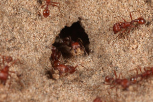 ant control covina