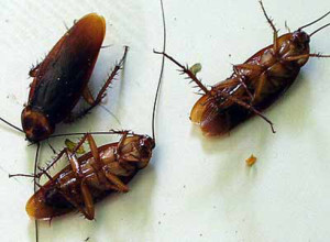 cockroach control covina